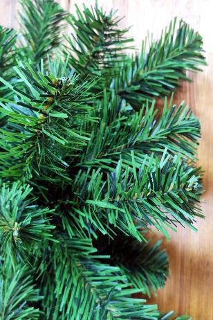 Сегментная ель Сибирская зелёная